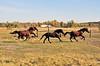 Horse - 24