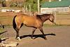 Horse - 36