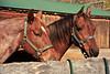 Horse - 46