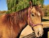 Horse - 43
