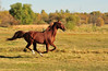 Horse - 20