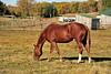 Horse - 32