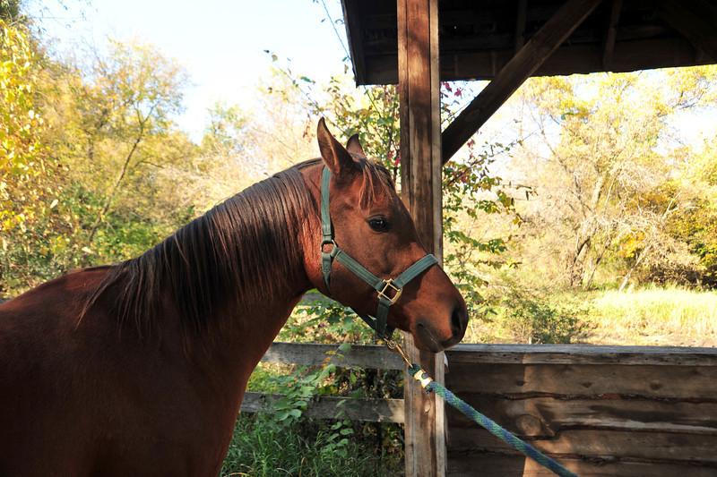 Horse - 52
