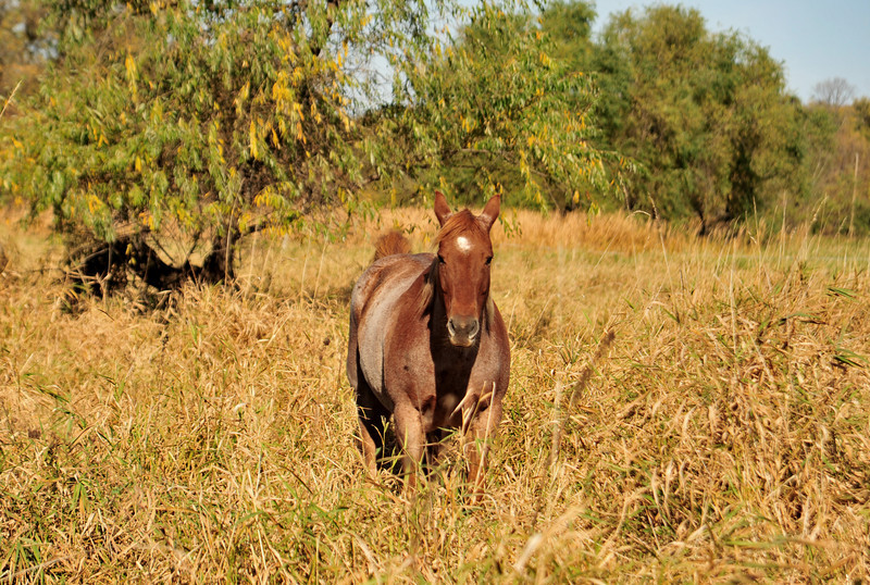 Horse - 31