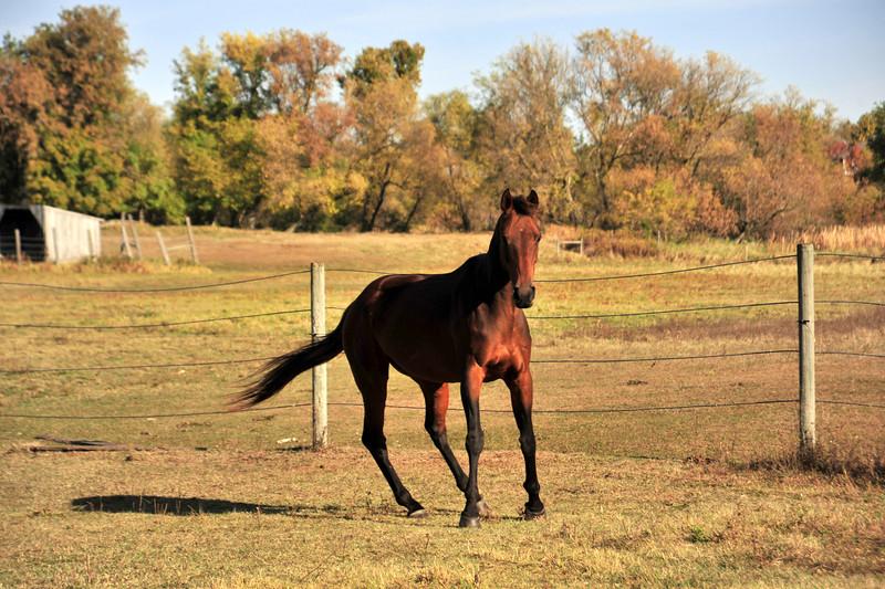 Horse - 10