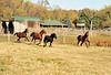 Horse - 22