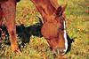 Horse - 39