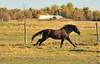 Horse - 21