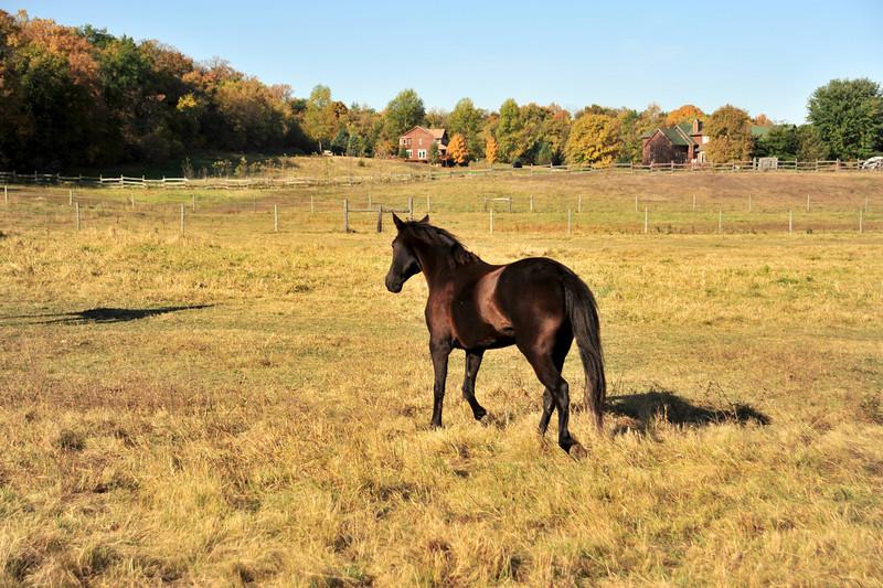 Horse - 11