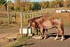 Horse - 33