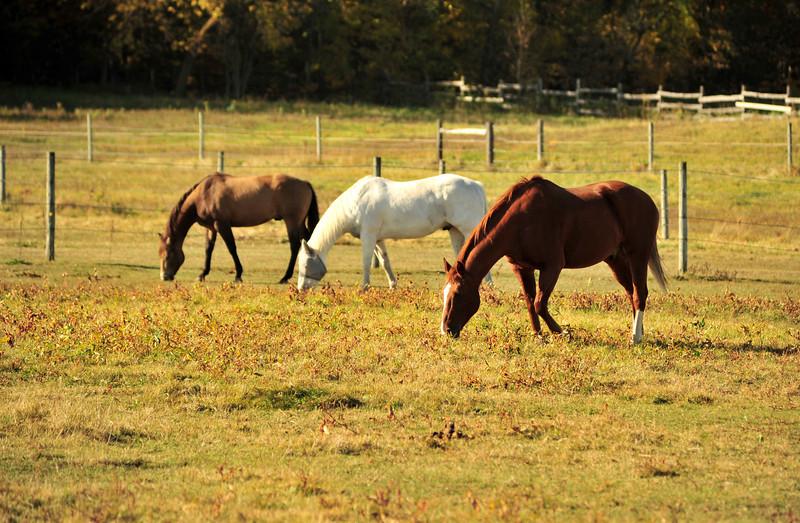 Horse - 37