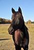 Horse - 03