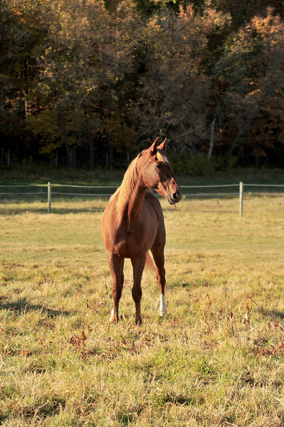 Horse - 05