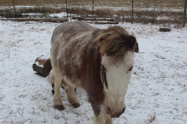 Leah's Goats 011618
