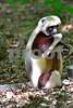 DSC_7455 Lemur Eating vt Best