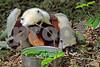 DSC_7545 Lemur mom twig foot