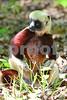 DSC_7452 CU Lemur Looking Right vt crop