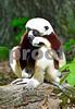 "DSC_7496 Lemur ""yatta yatta"" vt crop"