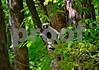 DSC_7446 Lemur Up Tree hz crop