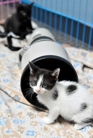 Lens Kittens