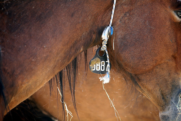 """In between""  Rachael Waller Photography photo documentary Saving the 3 strikes Mustangs"