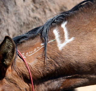 """3 Strikes NO MORE..Never again will a brand touch her""  Rachael Waller Photography photo documentary Saving the 3 strikes mustangs"