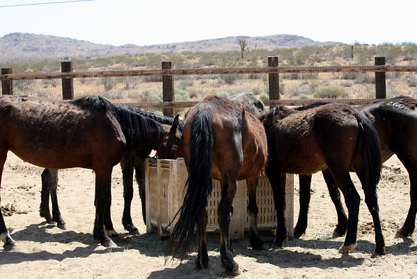 """Day 6 Breakfast""  Rachael Waller Photography Photo documentary Saving the 3 strikes Mustangs"