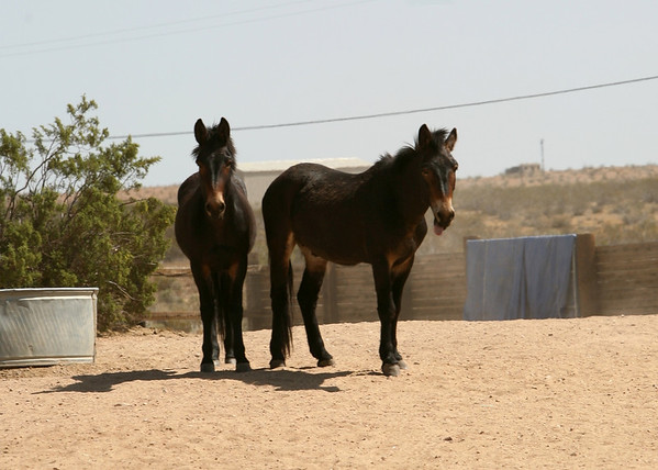 """Duke & Earl hang out by the water in the """"20""""  Rachael Waller Photography Photo journey documentary 3 strikes mustangs"""