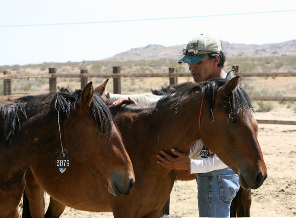 """Healing Hands"" (Rod Rondeaux - crow Indian horseman & Canon Girl, with ""Bff""  DAY 6  Rachael Waller Photography Photo documentary Saving the 3 strikes Mustangs"