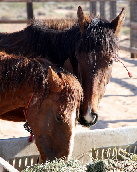 Breakfast with 3759 (2)<br /> <br /> Rachael Waller Photography<br /> Saving the 3 strikes mustangs- A photo journey<br /> Lifesavers Wild horse rescue