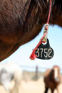 Tagged.  Rachael Waller Photography Saving the 3 strikes mustangs- A photo journey Lifesavers Wild horse rescue