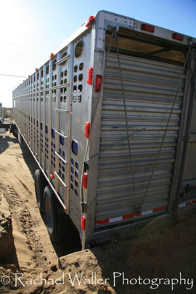 The transport for the 3 strikes survivors from NEB. 24 hours later the arrival at Lifesavers.<br /> <br /> Rachael Waller Photography<br /> Saving the 3 strikes mustangs- A photo journey<br /> Lifesavers Wild horse rescue