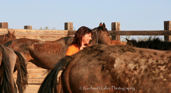 Jill Starr owner and president of Lifesavers Wild Horse rescue in the mix.  Rachael Waller Photography Saving the 3 strikes mustangs- A photo journey Lifesavers Wild horse rescue
