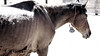 Canon Girl head's back to eat....thanks for stopping by sweet baby..<br /> <br /> Rachael Waller Photography<br /> Saving the 3 strikes mustangs- A photo journey<br /> Lifesavers Wild horse rescue