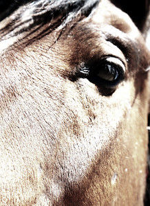 """The eye of hope""  Canon Girl Rachael Waller Photography Saving the 3 strikes horses Lifesavers Wild Horse Rescue"