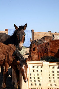 3 strikes no more.  Rachael Waller Photography Saving the 3 strikes mustangs- A photo journey Lifesavers Wild horse rescue
