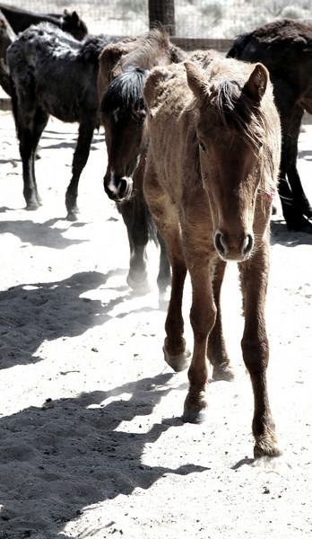 """""""walking in the light..shadows of our souls""""<br /> <br /> Rachael Waller Photography<br /> Saving the 3 strikes mustangs- A photo journey<br /> Lifesavers Wild horse rescue"""