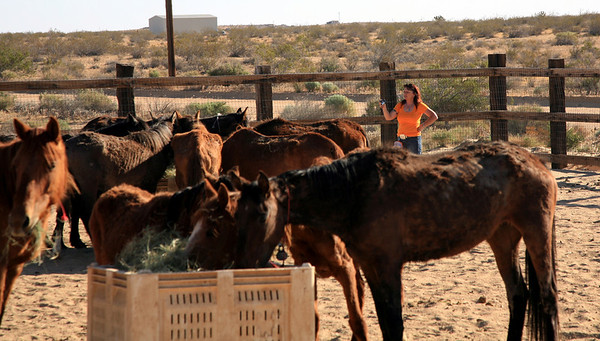 Jill Starr taking a look at the 3 strikes herd as they settle in and have some breakfast. Mother's Day at Lifesavers 09  Rachael Waller Photography Saving the 3 strikes mustangs- A photo journey Lifesavers Wild horse rescue