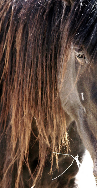 """""""a little piece of me""""<br /> <br /> Rachael Waller Photography<br /> Saving the 3 strikes mustangs- A photo journey<br /> Lifesavers Wild horse rescue"""