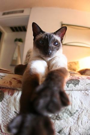 lisa d kitties 6.08