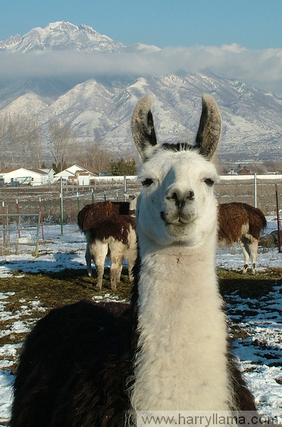 Fernando Llama in front of the Wasatch