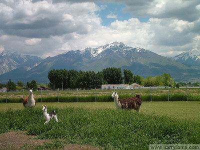 The young Eduardo runs for joy, watched by his aunt Bambi (left) and mother Daisy (right), in front of the Wasatch Mountains.