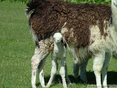 Baby Eduardo, a little lost underneath his mother, Daisy.
