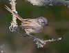 Wrentit... Fresh from a bath!