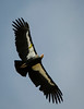Condor #^2