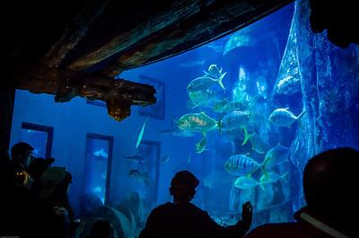 London Sealife Aquarium-15