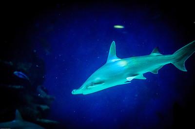 London Sealife Aquarium-5