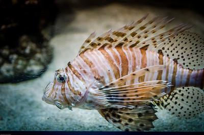London Sealife Aquarium-18
