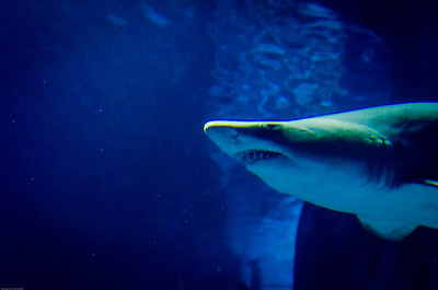 London Sealife Aquarium-23