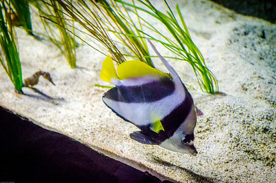 London Sealife Aquarium-24